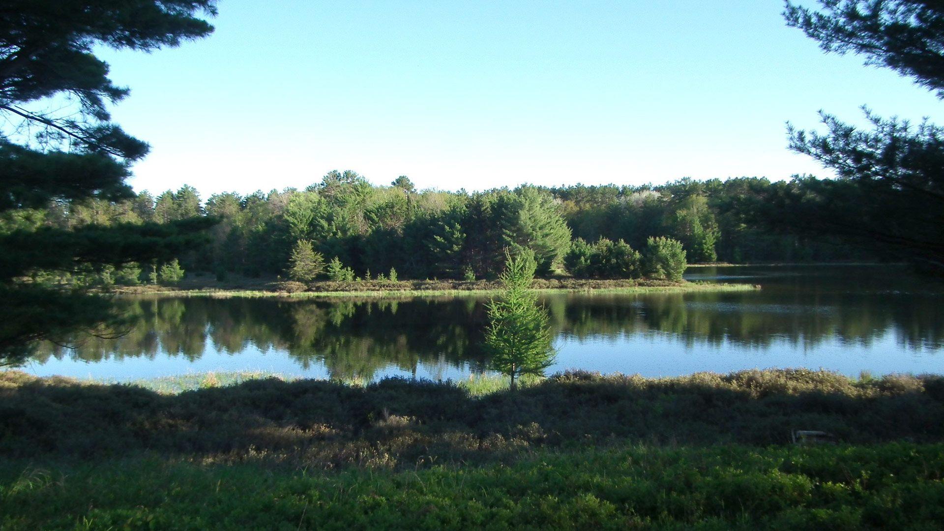 Spring in Land O' Lakes