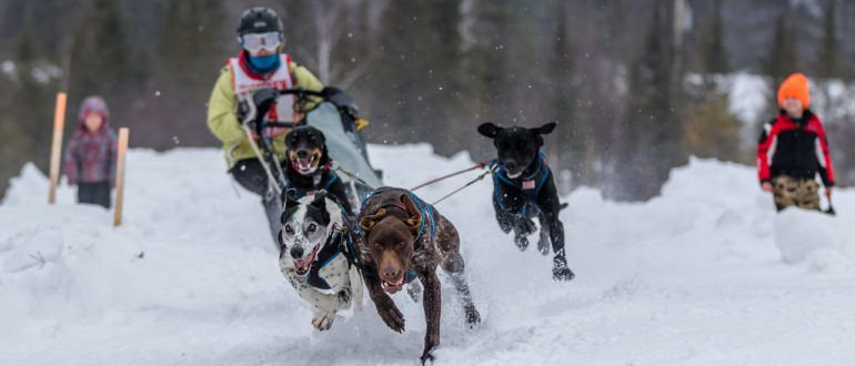Three Bear Sled Dog Race